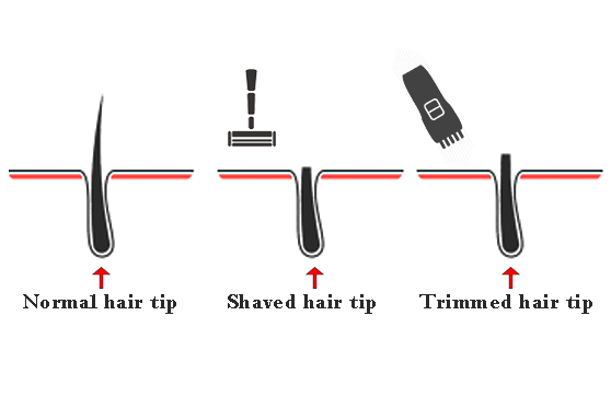 normal hair tip vs shaved and trimmed hair tip
