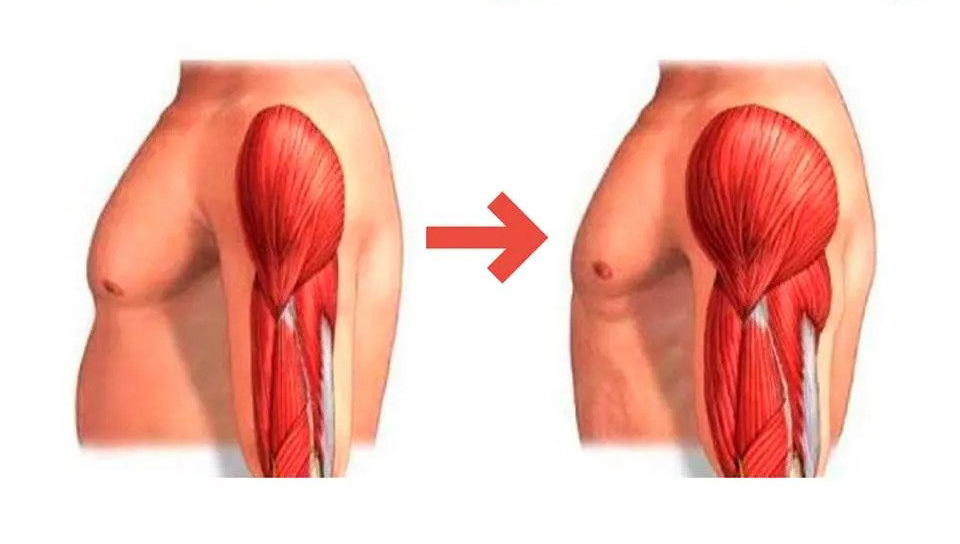 Muscle Hypertrophy Vs. Muscle Cramp