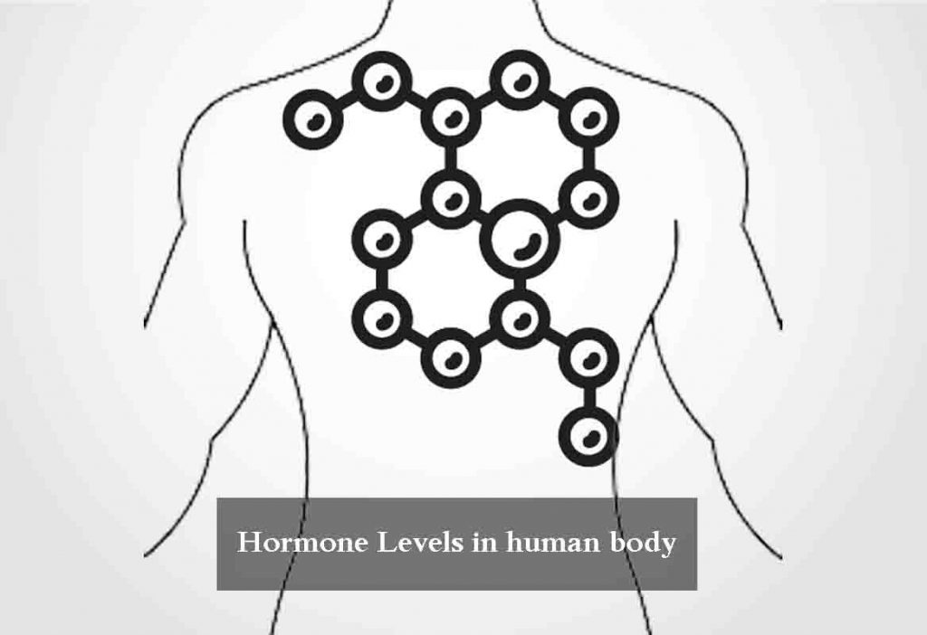 hormone levels in human body
