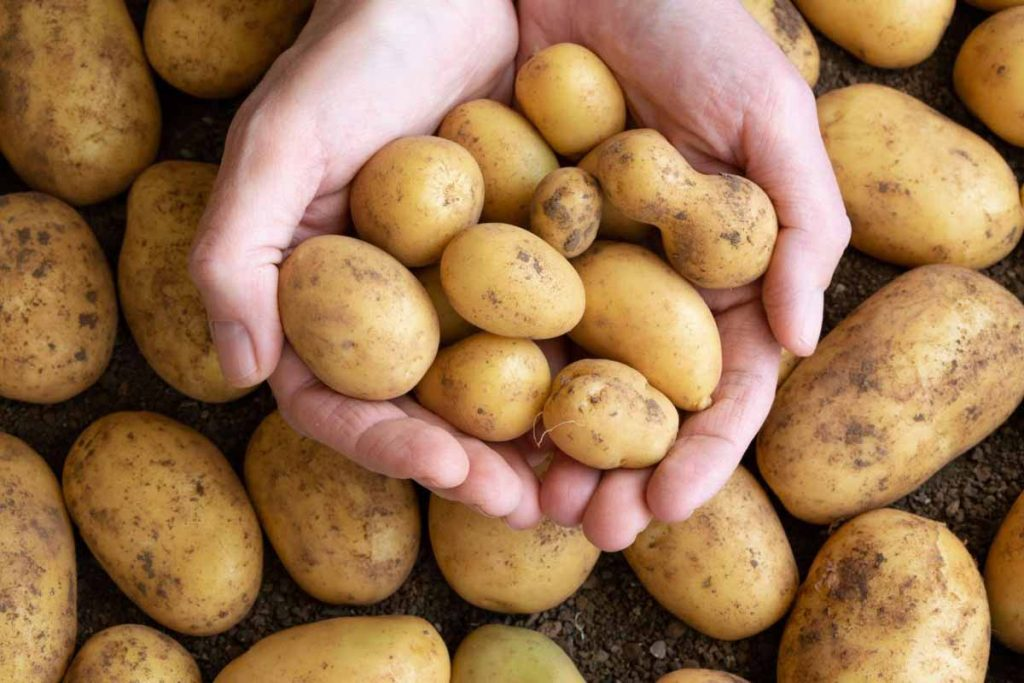 Potato Helps To Remove Under Eye And Nose Marks For Men
